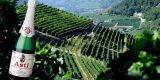 Tour in Italy: Asti Spumante, the worldwide famous sweet sparkling wine - pic 1