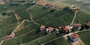Barbaresco, the great dry red wine produced in Piedmont